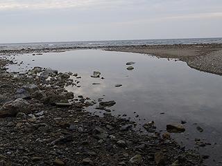 河口転石帯