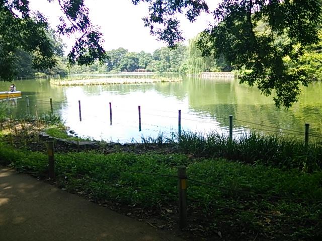善福寺公園3