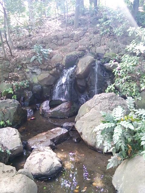 善福寺公園6