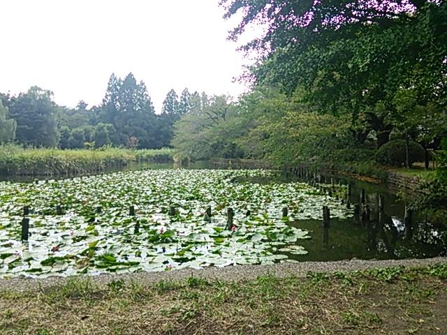 善福寺公園9