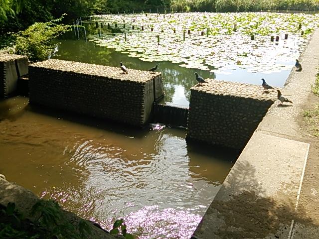 善福寺公園10