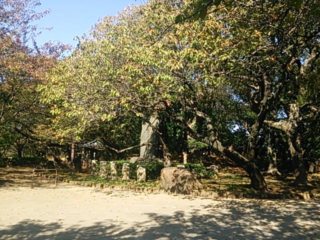 飛鳥山公園06