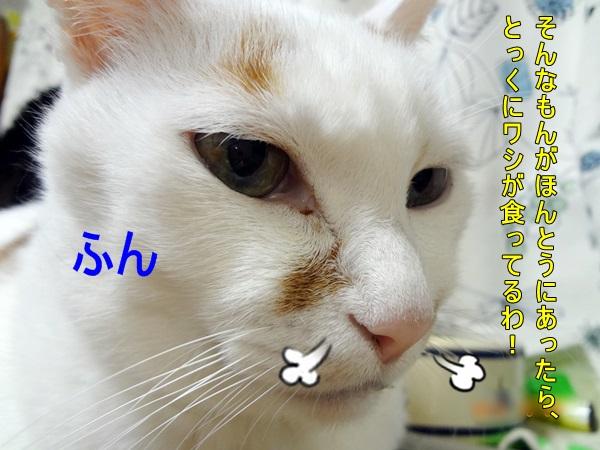 1166_20131021210616aea.jpg