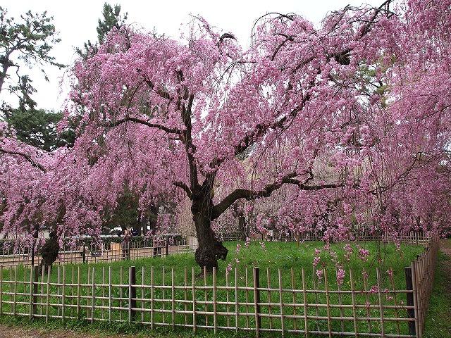 051京都御苑