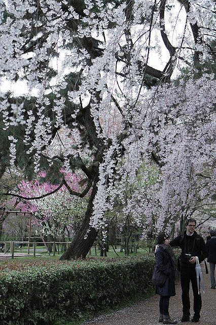 IMG_5204京都御苑