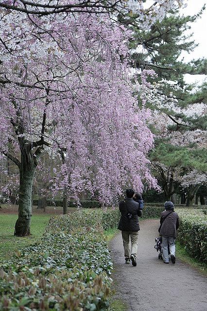 IMG_5205京都御苑