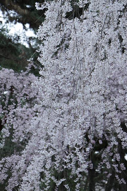 IMG_5208京都御苑