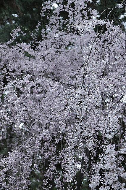 IMG_5210京都御苑