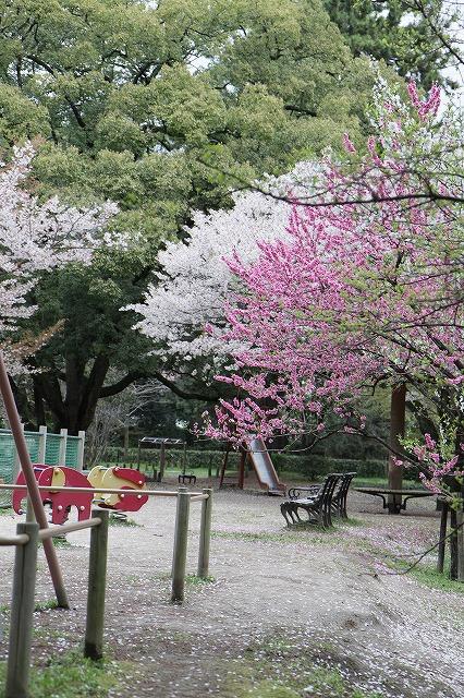 IMG_5212京都御苑