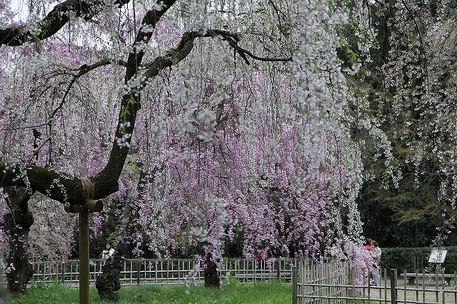 IMG_5225京都御苑