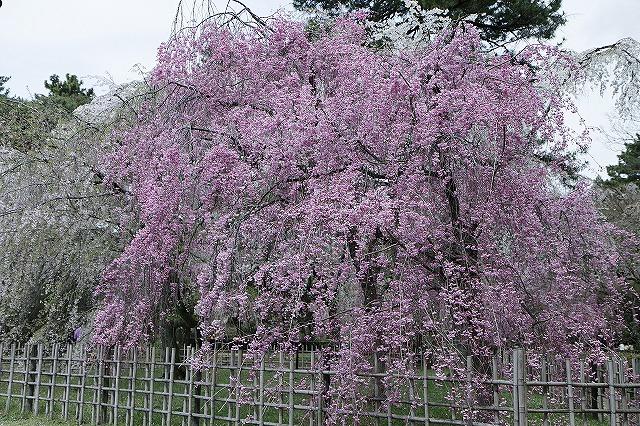 IMG_5257京都御苑