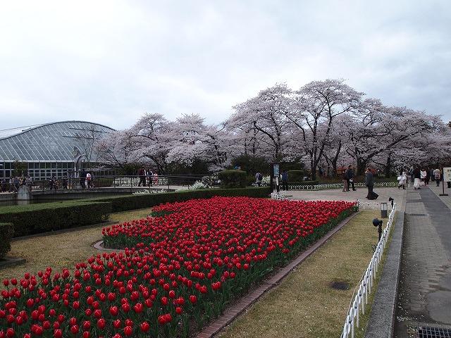 091京都府立植物園
