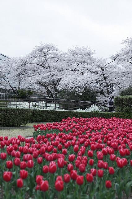 IMG_5319京都府立植物園