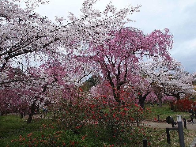 094京都府立植物園