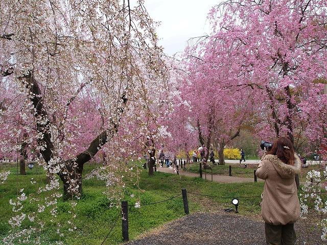 099京都府立植物園