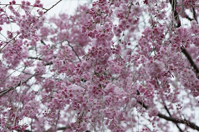IMG_5344京都府立植物園