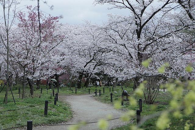 IMG_5374京都府立植物園