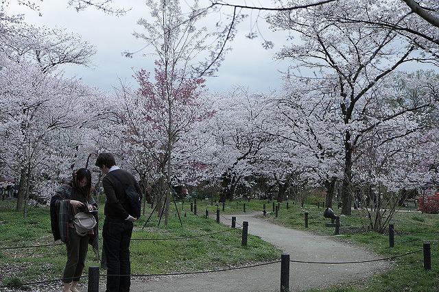IMG_5379京都府立植物園
