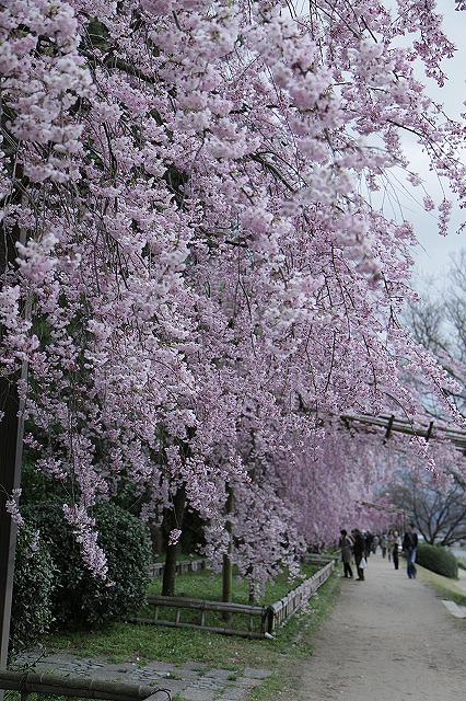 IMG_5398半木の道