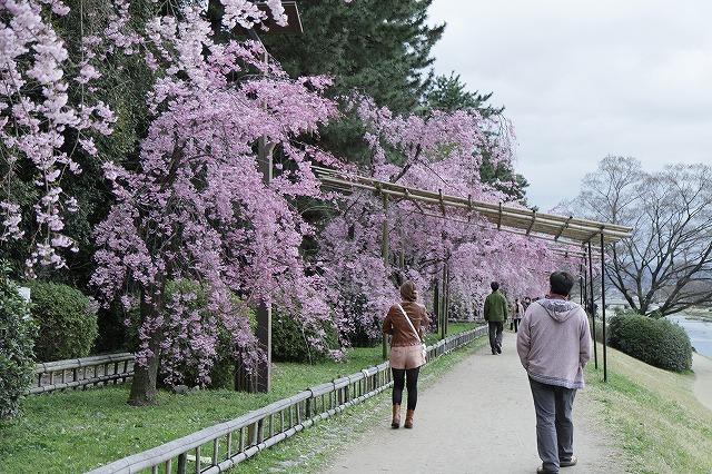 IMG_5404半木の道