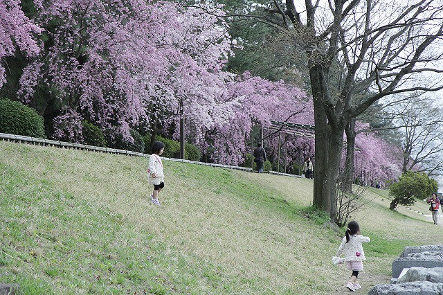 IMG_5425半木の道