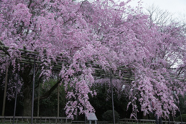 IMG_5467半木の道