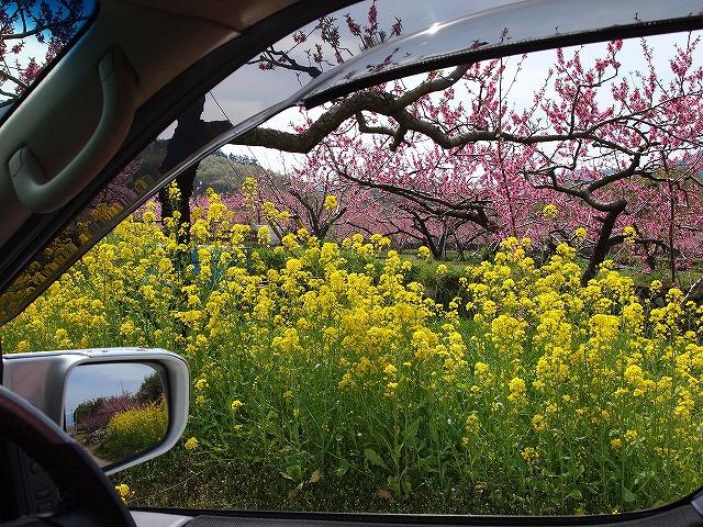 044桃の花