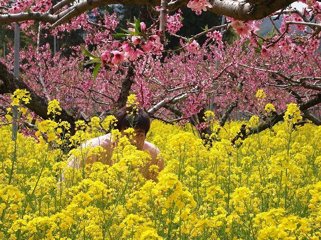 056桃の花