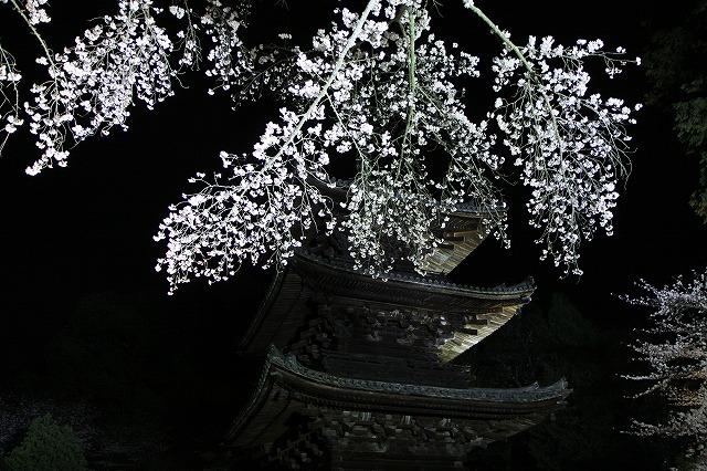 IMG_5555三井寺