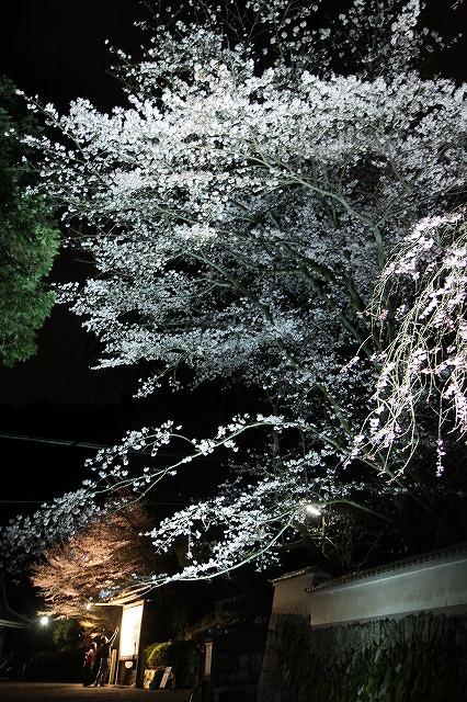IMG_5559三井寺