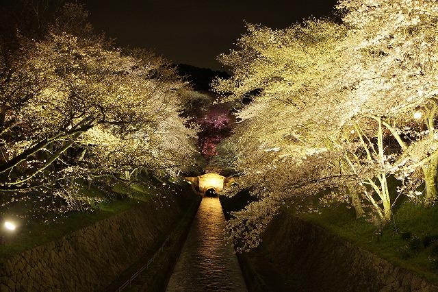 IMG_5574琵琶湖疎水