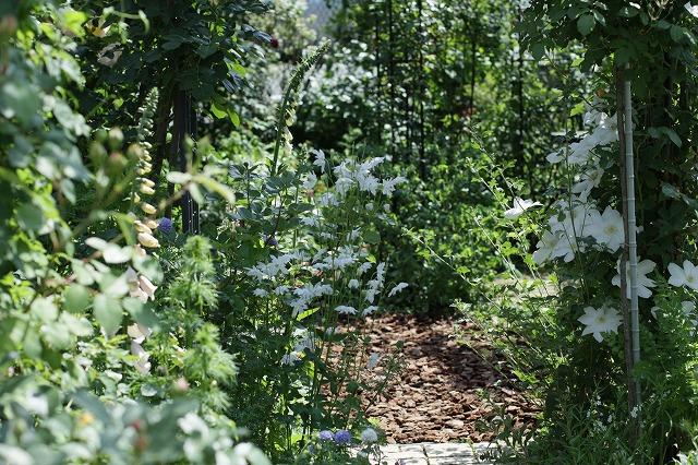 IMG_8467ゆうさんのお庭