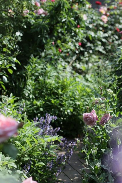 IMG_8522おじむくさんのお庭