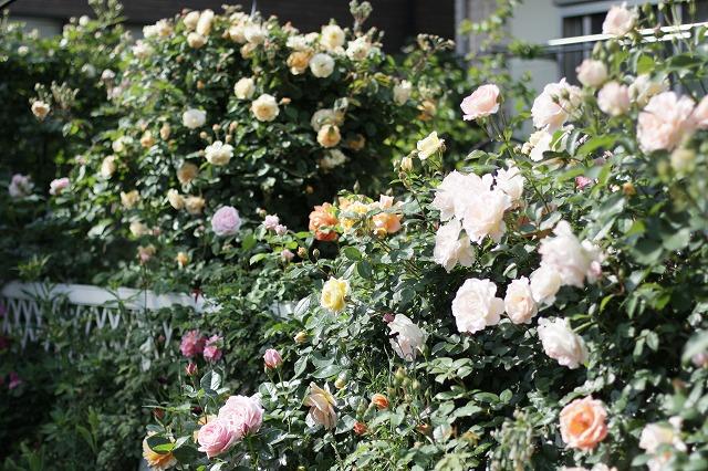 IMG_8536なおみんさんのお庭