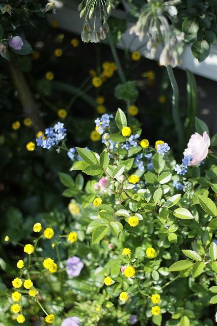 IMG_8542なおみんさんのお庭