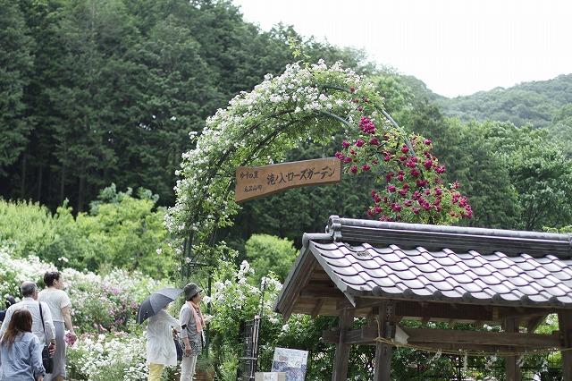 IMG_2134滝ノ入ローズガーデン