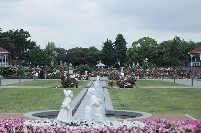 IMG_2467敷島バラ公園