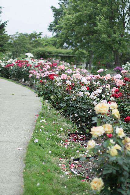 IMG_3389茨城県フラワーパーク