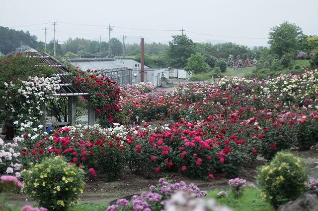 IMG_3401茨城県フラワーパーク