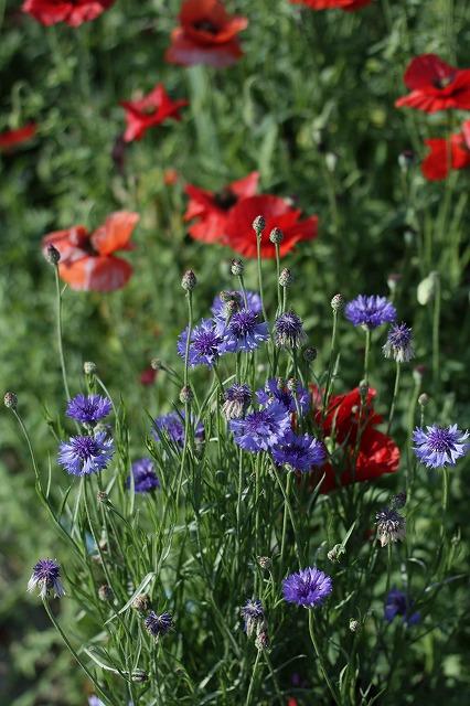 IMG_3806母の庭