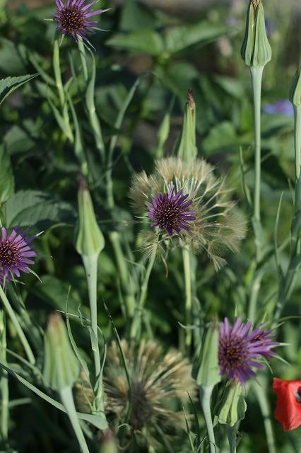 IMG_3808母の庭