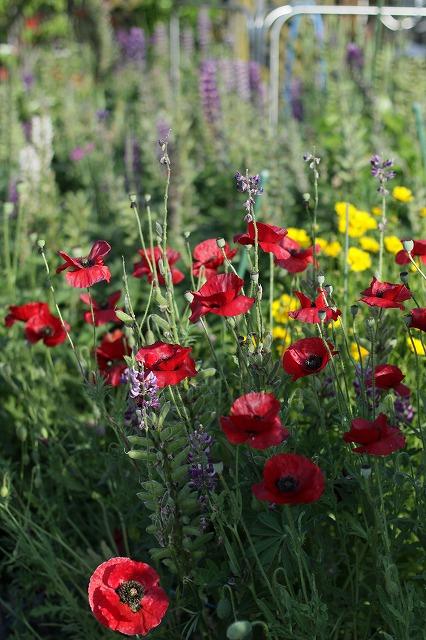 IMG_3811母の庭