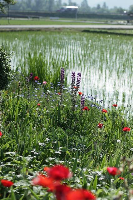 IMG_3824母の庭