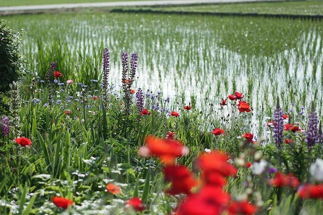 IMG_3826母の庭