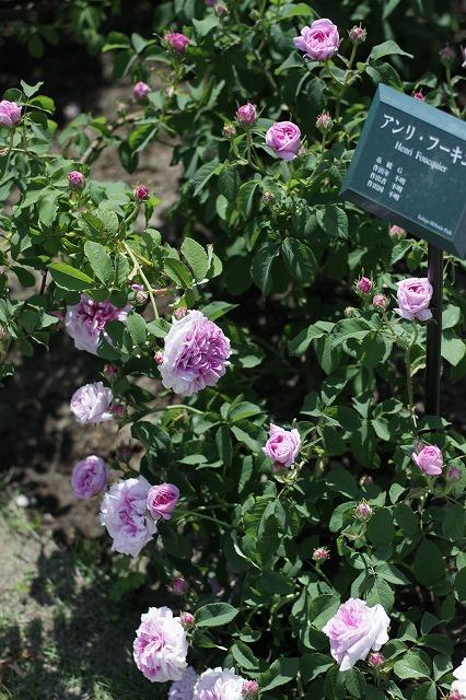 IMG_3843越後丘陵公園
