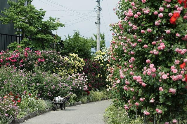 IMG_4224中野一本木公園