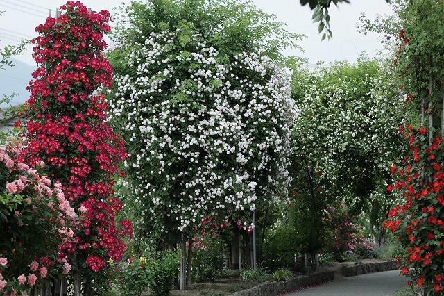 IMG_4242中野一本木公園