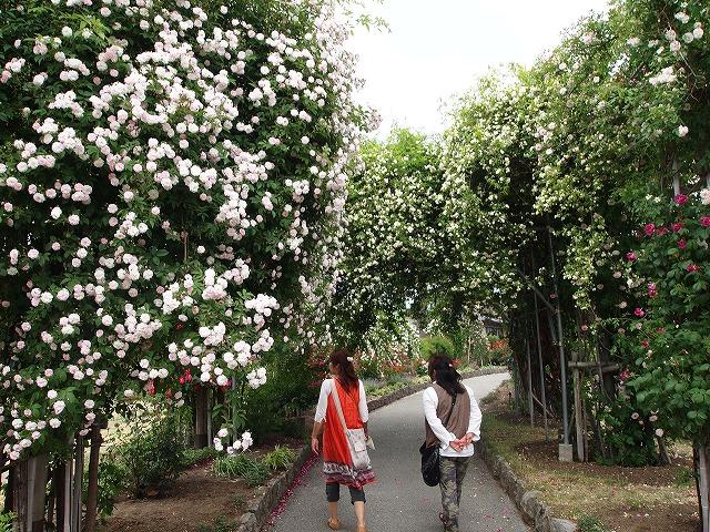P6070890中野一本木公園