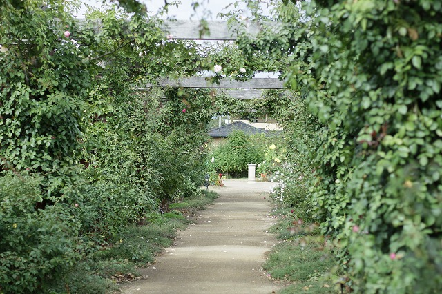 IMG_6067一本木公園