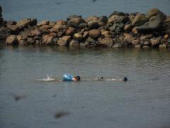 半元キャンプ場 泳ぎ